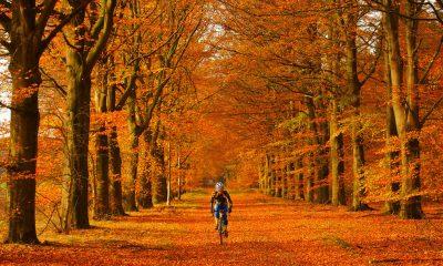 kép forrása: wheelsuckers.co.uk